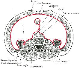 Ostéopathe Nice